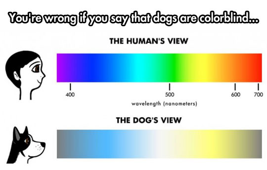 The Truth About A Dog
