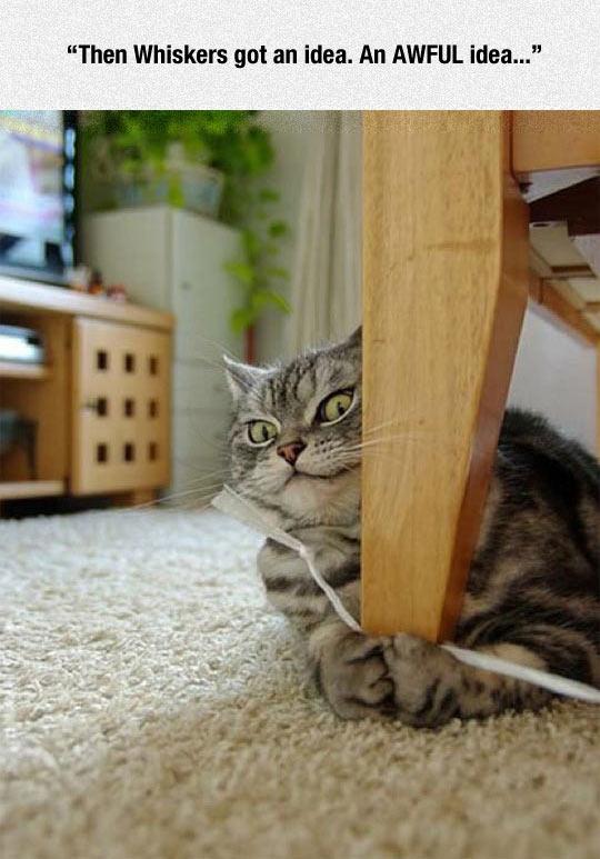 funny-cat-evil-face-string