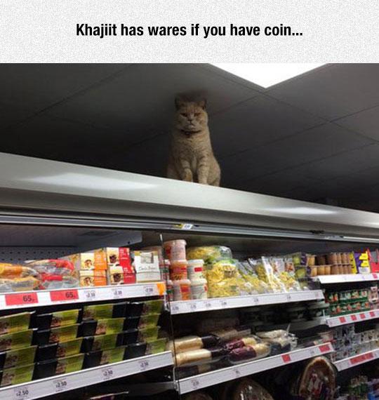 funny-cat-supermarket-groceries