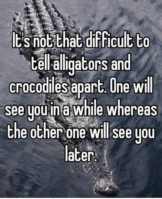 funny-difference-alligator-crocodile