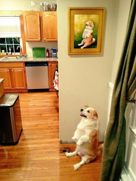 funny-dog-painting-living-room
