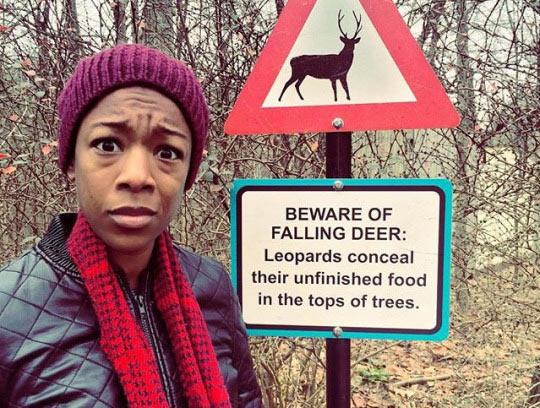 funny-falling-deer-sign