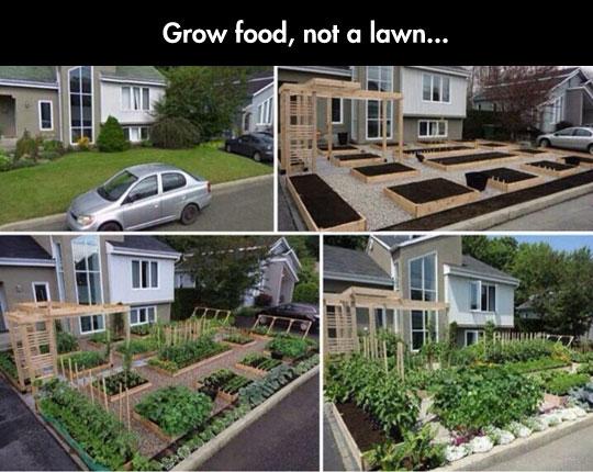 growing-garden-food-lawn