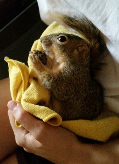 squirrel_christmas_tree_02