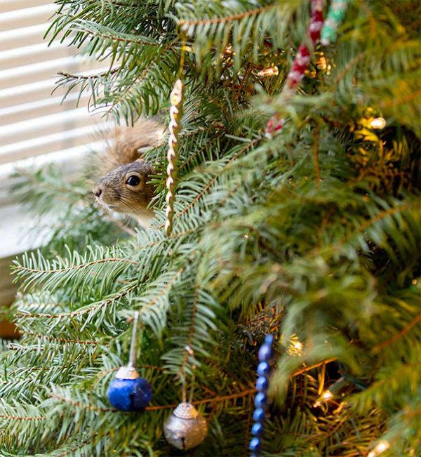 squirrel_christmas_tree_04
