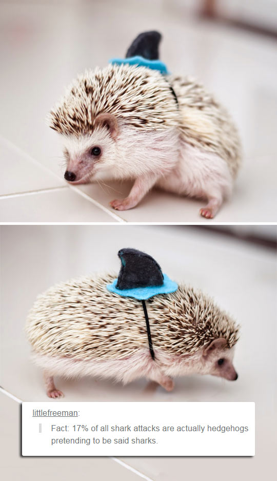A Fact About Hedgehogs