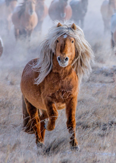 A fabulous horse was spotted in the wilds of Mongolia
