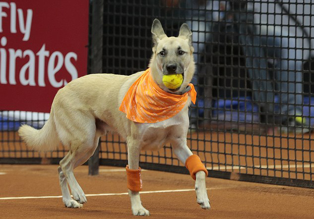 Brazil Open is using shelter dogs as ball dogs
