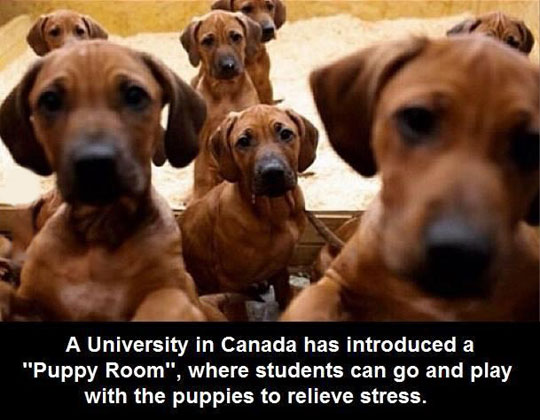 Canadian Students Have It A Lot Better
