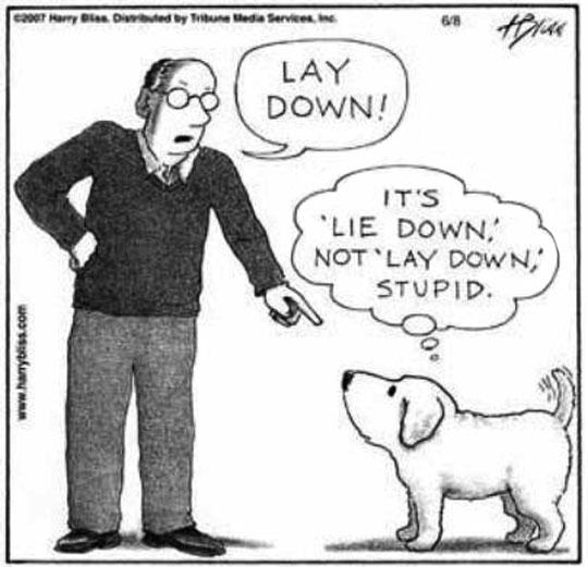 Dog Is A Grammar Enthusiast