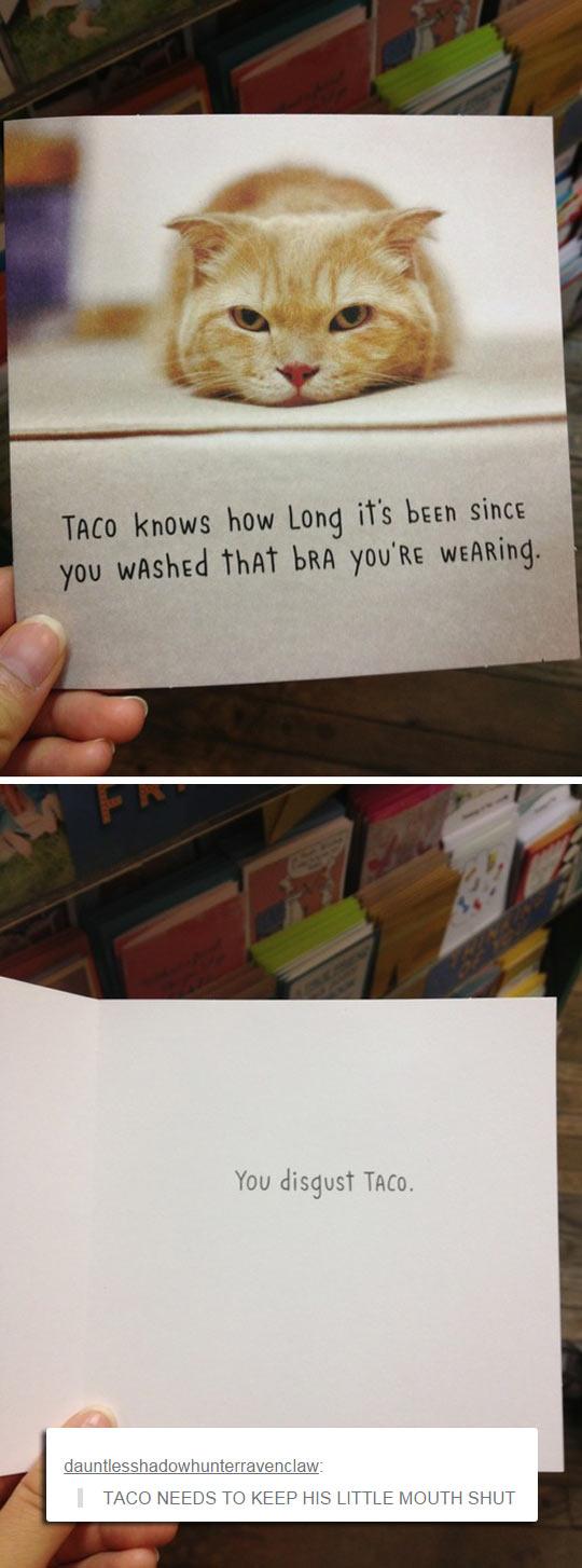 Shut Up, Taco