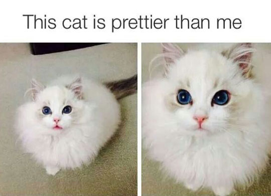 So Much Beauty And Fluffiness