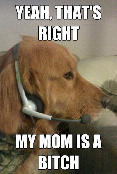 Xbox Live Dog