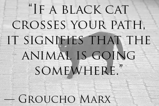 cool-Groucho-Marx-quote-black-cat