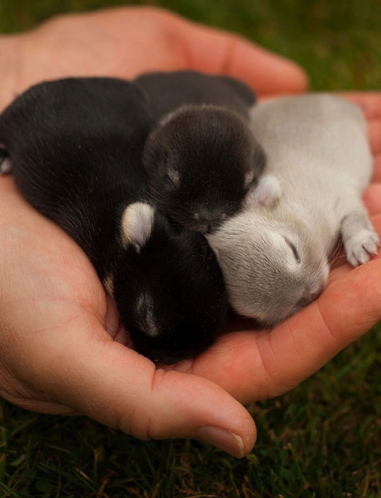 cool-baby-bunnies-hand-small