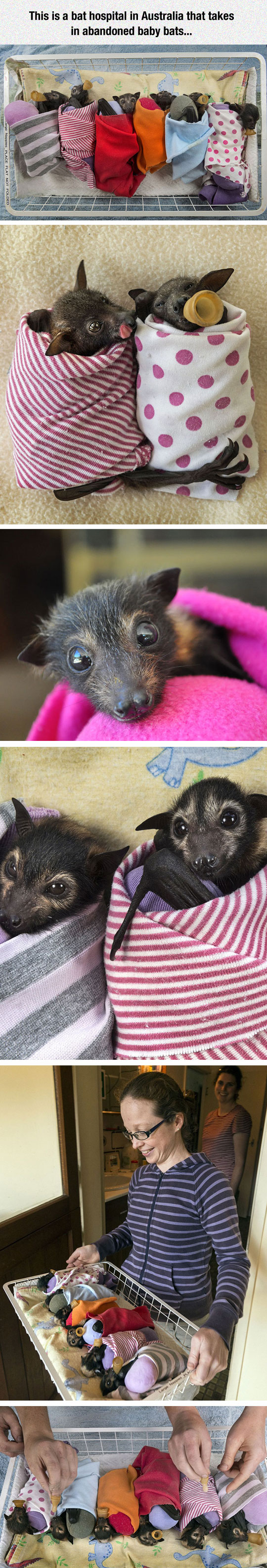 cool-bat-hospital-blanket-cozy
