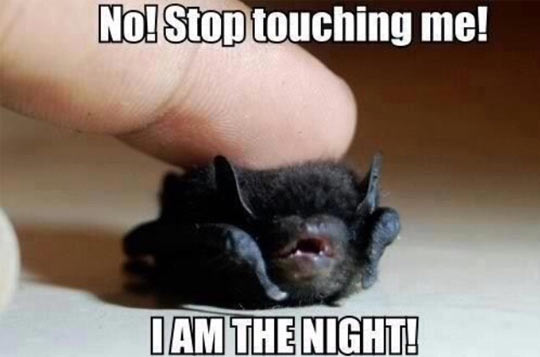 cool-bat-little-night-touching-finger