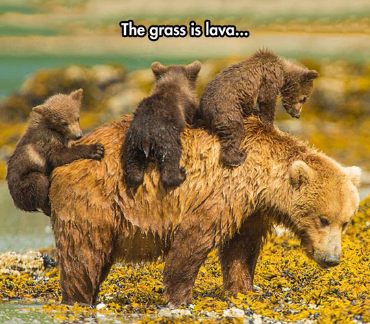 cool-bear-babies-mother-playing