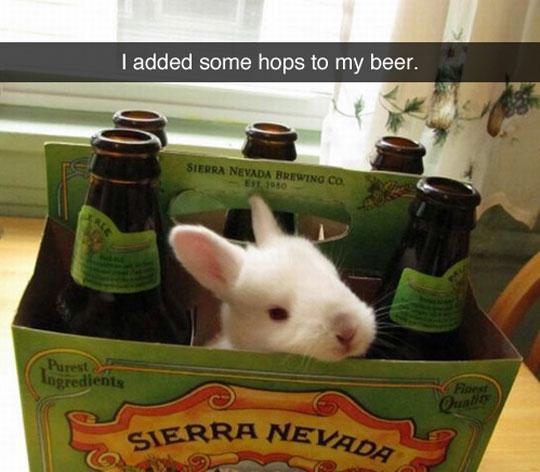 cool-beer-case-bunny-rabbit