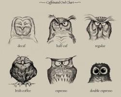 Owl Chart