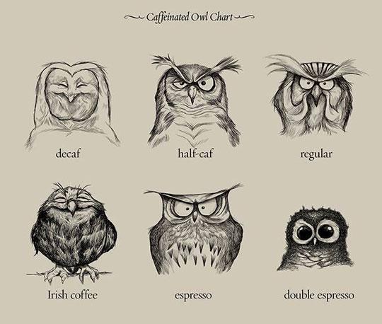 cool-caffeine-owl-chart-drawing