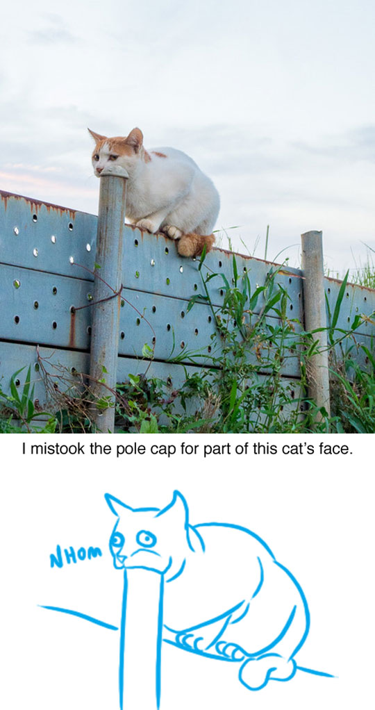 cool-cat-biting-pole-cap-cartoon