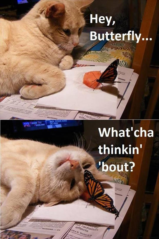 Butterfly Meets Curious Cat