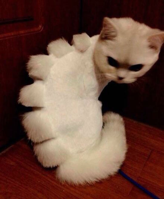 cool-cat-dinosaur-haircut