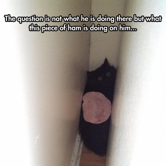 cool-cat-ham-piece-trap