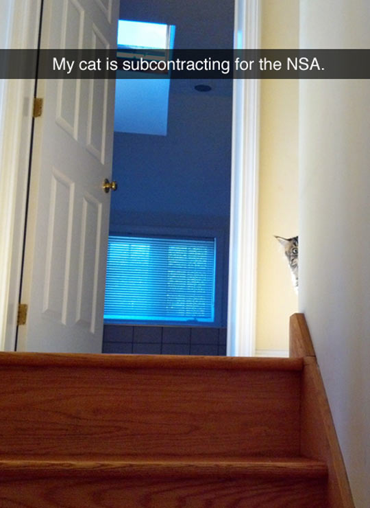 cool-cat-hiding-stairs
