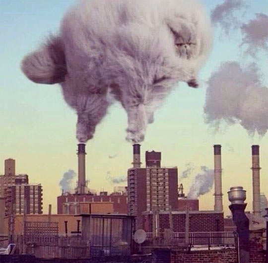 cool-cat-smog-factory-pollution