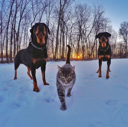 cool-cat-snow-dogs-guards