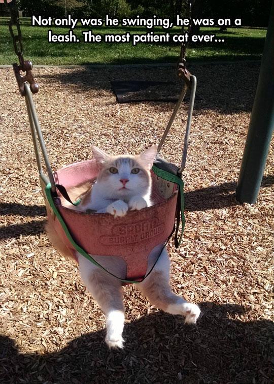 cool-cat-swing-park