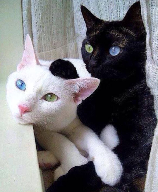 Unique Sibling Eyes