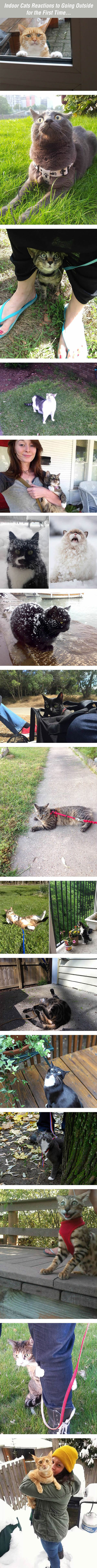 cool-cats-going-outside-first-time