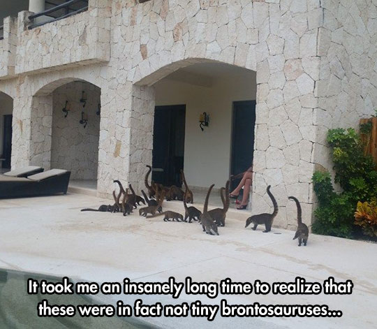 Not Tiny Brontosauruses