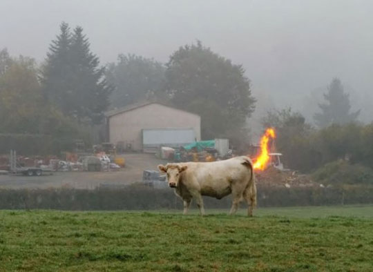 cool-cow-fart-fire