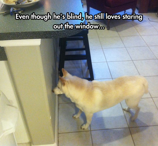 cool-dog-blind-against-wall