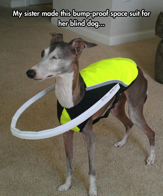 Helping A Blind Dog