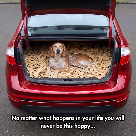 cool-dog-car-cookie-full