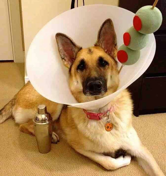cool-dog-collar-cone-olive-costume