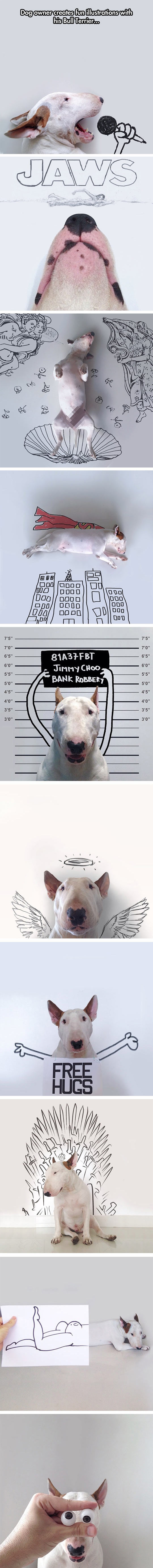 The Fascinating Life Of A Bull Terrier