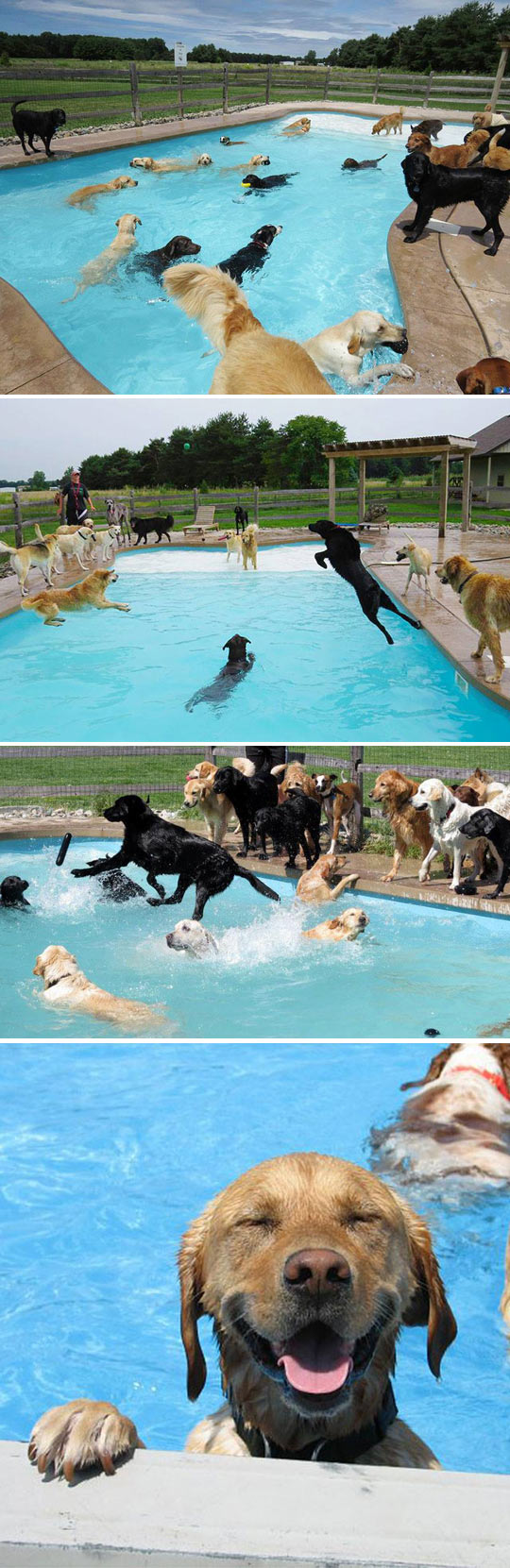Pool Party For Dogs