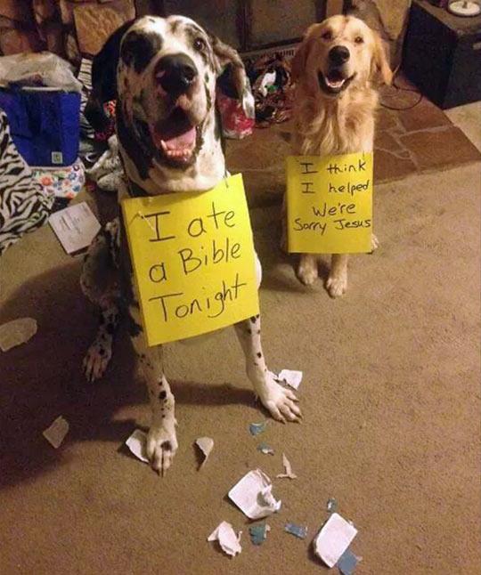 Atheist Dogs