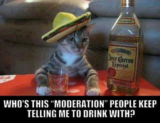 cool-drunk-Mexican-cat-Tequila