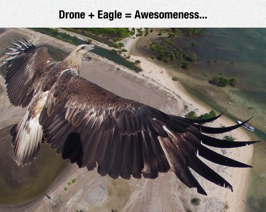 Drone And Eagle Flight Together