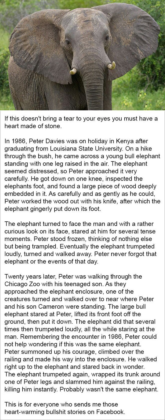 cool-elephant-story-wound-zoo