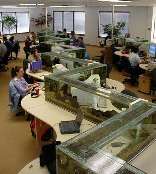 cool-fish-tank-office-working