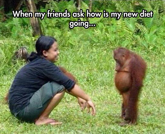 cool-friends-diet-sad-ape