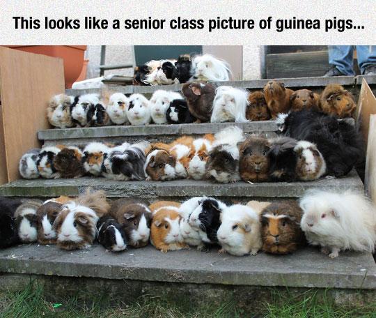 Senior Class Picture